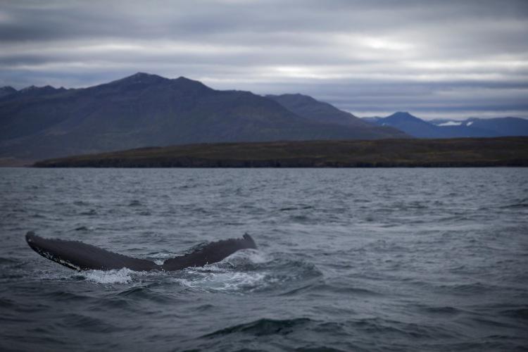 walvis1